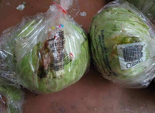 Rotten lettuce