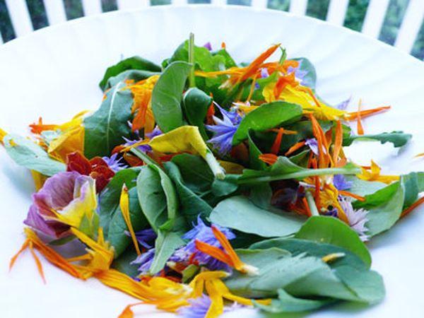salade-fleur-bezajel-flick